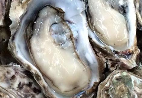ホントの牡蠣の旬は春って知ってる?広島春牡蠣が一番じゃろ!