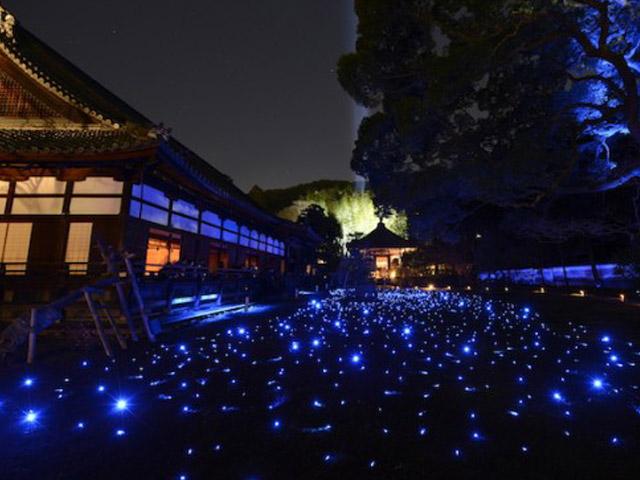 21日まで!新・春の京都の風物詩...